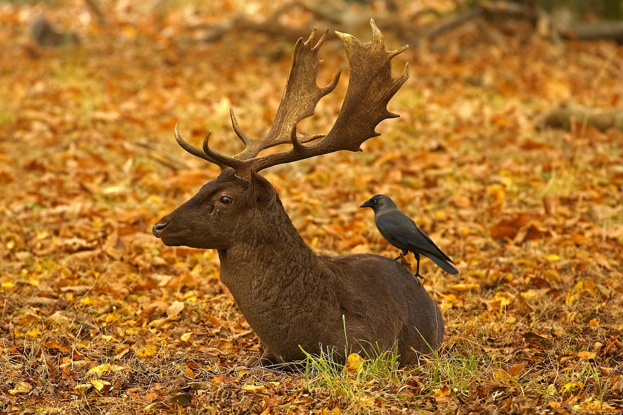 картинки лесных животных и птиц был своеобразный